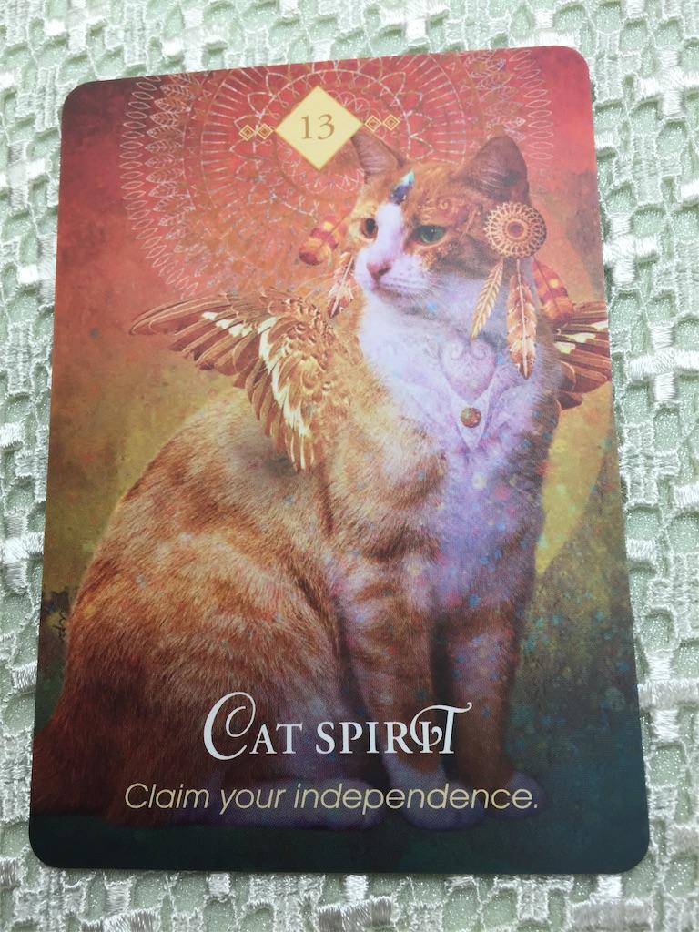 猫のオラクルカード