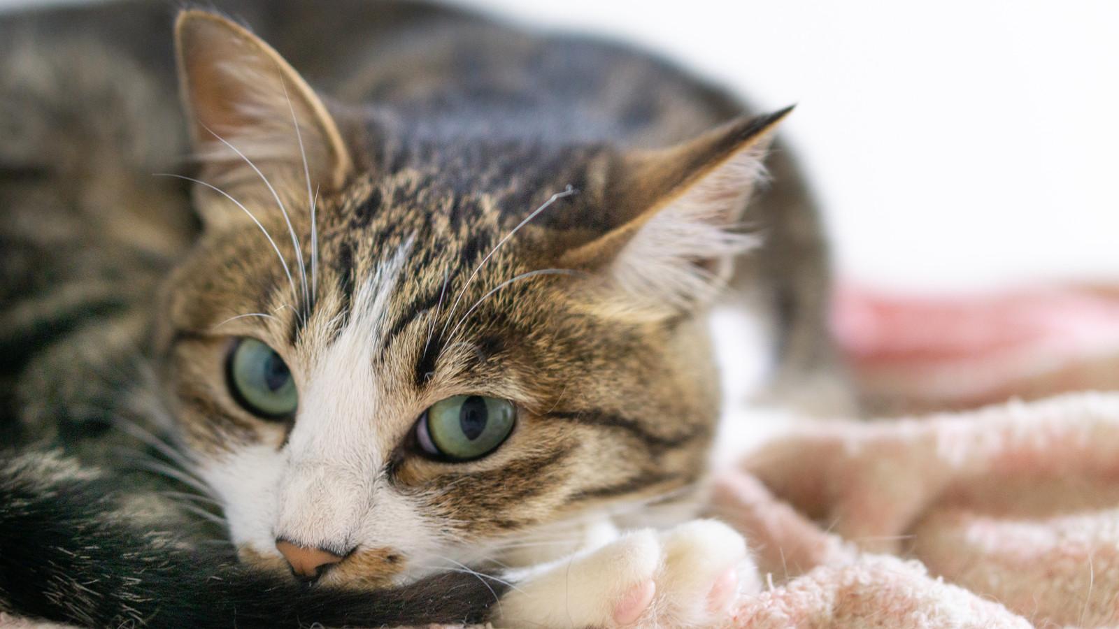 上目遣いの猫写真