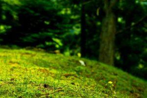 綺麗な緑の写真