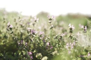 心が落ち着く草花の画像